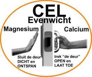 magnesium-calcium-balans