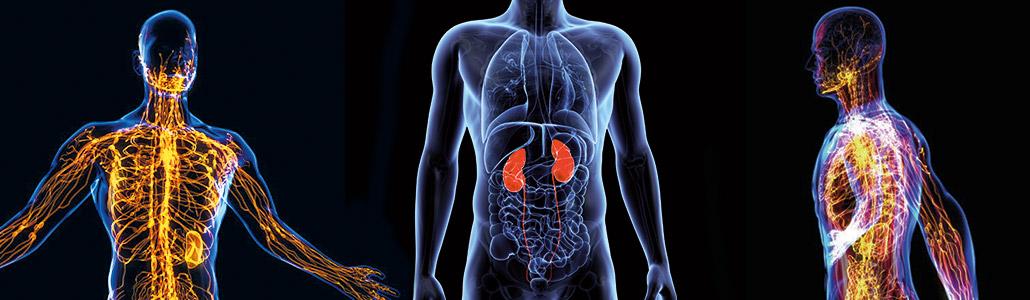 detox lymfatisch systeem nieren